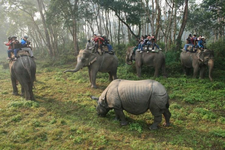 Chitwan-National-Park.jpeg